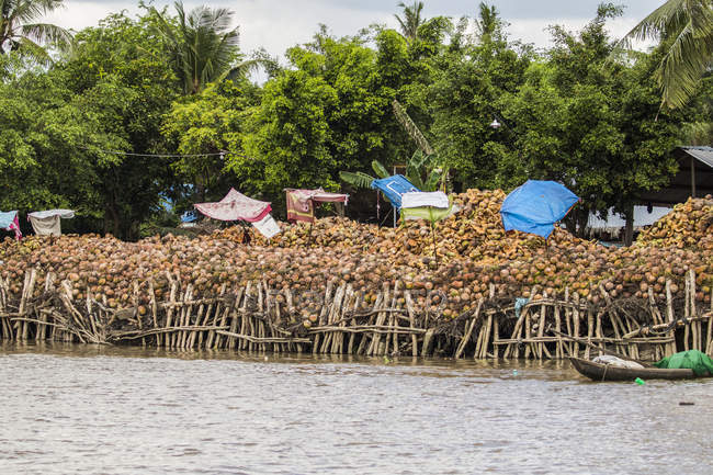 Boat laden with coconuts in the Mekong River; Ben Tre, Vietnam — Stock Photo
