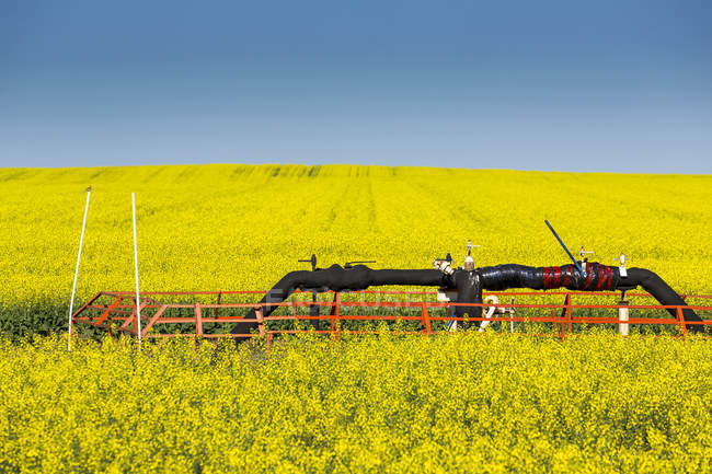 Flowering canola field with a pipeline in the field with blue sky; Beiseker, Alberta, Canada — Stock Photo