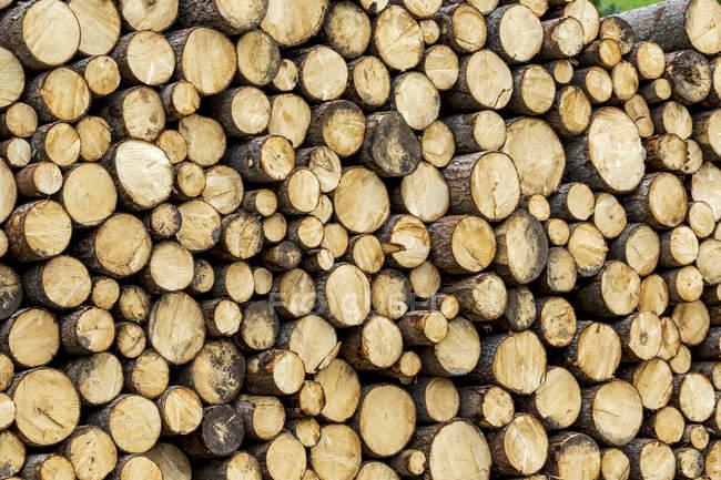 Nahaufnahme von aufeinandergestapelten Baumstämmen; san candido, bozen, italien — Stockfoto