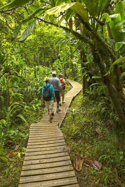 Tourists on boardwalk to Waimoku Falls, Kipahulu, Maui, Hawaii, USA — Stock Photo