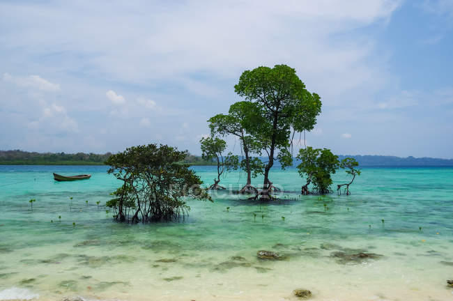 Trees Growing In The Turquoise Waters Off S Andaman