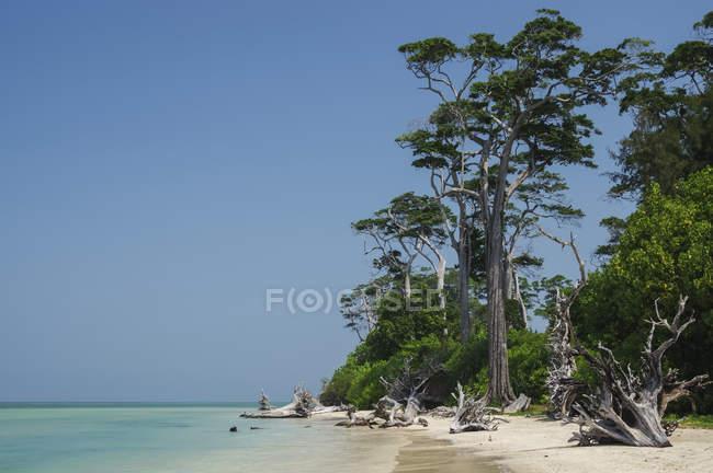 Коряги на тропическом пляже с голубым небом, бирюзовой водой и белым песком; Андаманские острова, Индия — стоковое фото