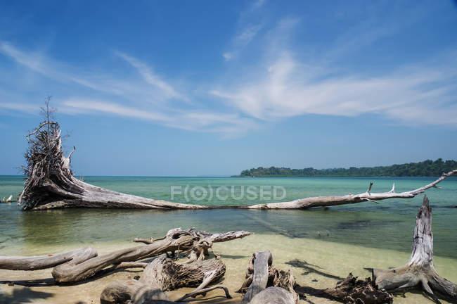Madeira petrificada e uma árvore morta em uma praia tropical com céu azul e água azul-turquesa; Ilhas Andaman, Índia — Fotografia de Stock