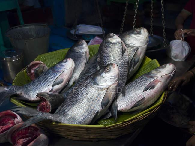 Свежая рыба в корзине в стойле Naskar рыбы; Калькутта, Западная Бенгалия, Индия — стоковое фото