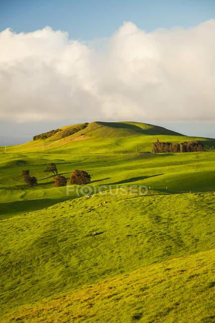 Пишні зелені пасовища та пресованої конуси, Північна регіоні Kohala Гора, острові Гаваї, Гаваї, США — стокове фото
