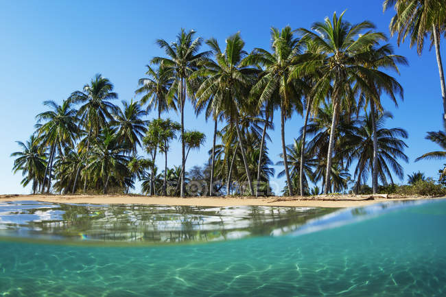 Split view with beach and palm trees, Lanai, Hawaii, Estados Unidos de América - foto de stock