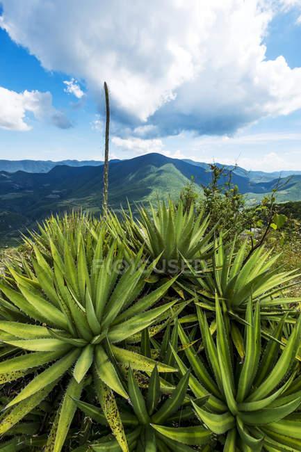 Гірський ландшафт Oaxaca з сукулентів на передньому плані, Hierve el Agua Oaxaca, Мексика — стокове фото