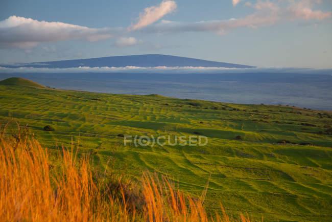 Регіоні Kohala гірських пасовищ, старе Гавайські тераси, Мауна Loa далеко, острові Гаваї, Гаваї, США — стокове фото