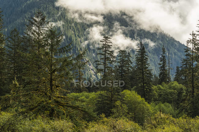 Moody landscape of low cloud over the Great Bear Rainforest, Hartley Bay, British Columbia, Canada — Stock Photo