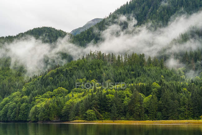 Moody landscape of mist over the Great Bear Rainforest; Hartley Bay, British Columbia, Canadá — Stock Photo