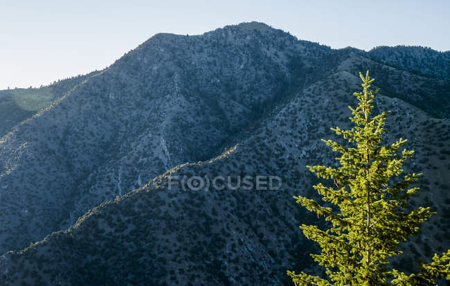 Rugged mountain face under a blue sky with a tree illuminated by sunlight in the foreground, Logan, Utah, United States of America — Stock Photo