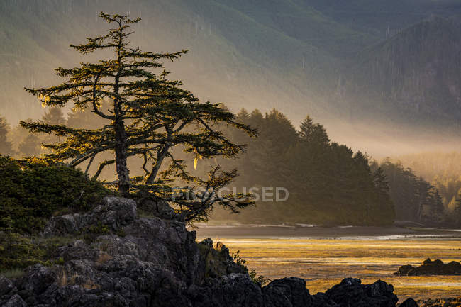 Sunrise on Nootka Island at low tide in Nuchatlitz Provincial Park, British Columbia, Canada — Stock Photo