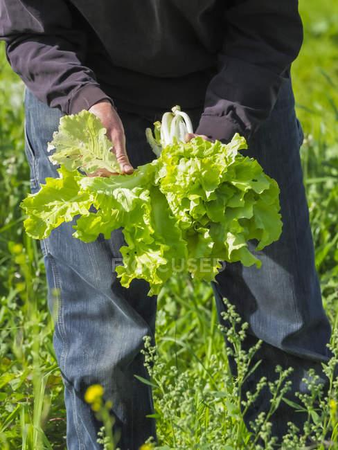 Agricultora cosechando verduras, Condado de Prince Georges; Upper Marlboro, Maryland, Estados Unidos de América - foto de stock