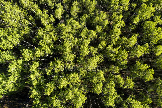Вид з дерева покриті лісом, захід від долини Тернер, Альберта, Канада — стокове фото