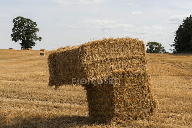 Stacked hay bales in a field; Northumberland, England — Stock Photo