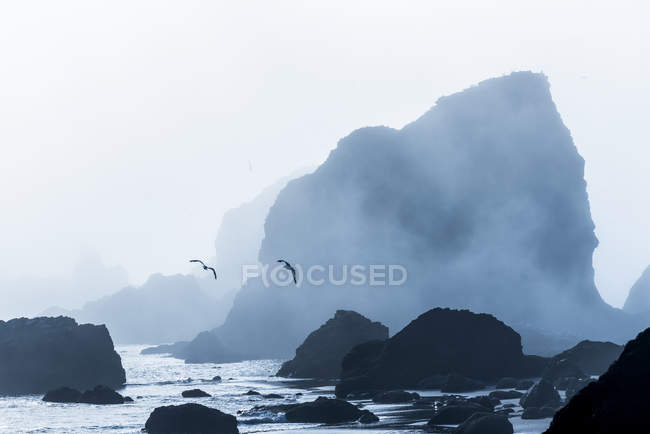 Seagulls are silhouetted against fog at Ecola State Park, Cannon Beach, Oregon, USA — Stock Photo