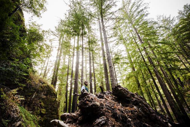 Mann, der in einem Wald unter hohen Bäumen — Stockfoto