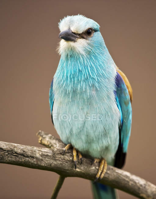 Close-up of a colorful bird sitting on branch against blurred background — Stock Photo
