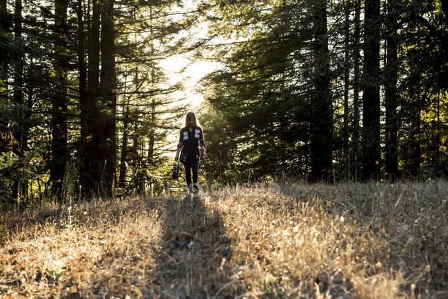 Uma mulher andando através de um campo em uma floresta ao entardecer, Purisima Creek Redwoods, Califórnia, Estados Unidos da América — Fotografia de Stock
