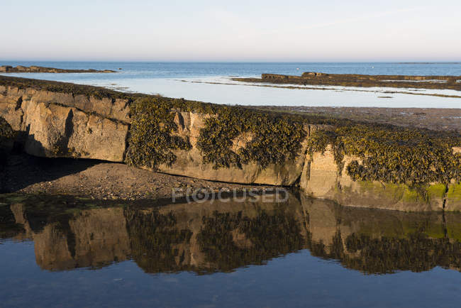 Alghe marine su rocce riflesse in una piscina, costa orientale del Northumberland, Newton by the Sea, Northumberland, Inghilterra — Foto stock