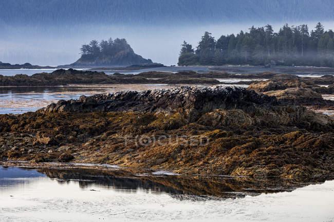 Amanece sobre un islote frente a la isla de Nootka en marea baja en Nuchatlitz Provincial Park, Columbia Británica, Canadá - foto de stock
