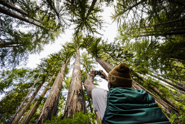 Man standing and photographing the tall trees in a forest — Stock Photo