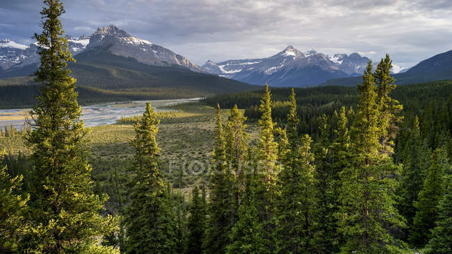 Rugged Canadian Rocky Mountains with a forest and river in the valley, Banff National Park; Saskatchewan River Crossing, Alberta, Canada — Stock Photo