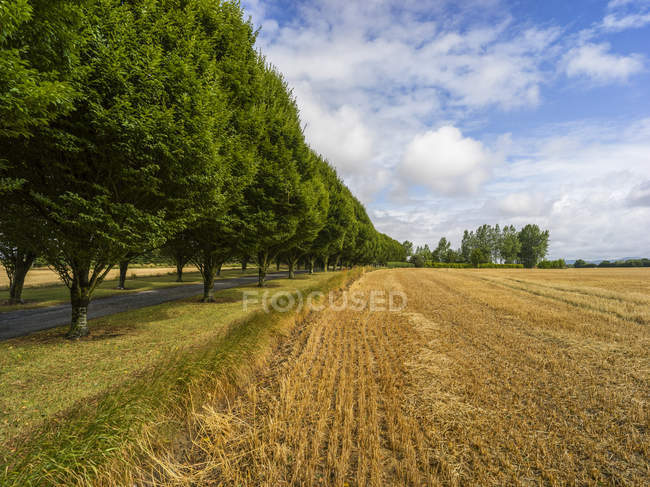 Route bordée d'arbres luxuriants le long d'un champ avec une récolte coupée, Buttevant, comté de Cork, Irlande — Photo de stock