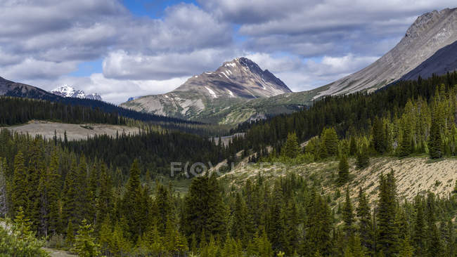 Rugged Canadian Rocky Mountains with a forest in the valley; Jasper, Alberta, Canada — Stock Photo