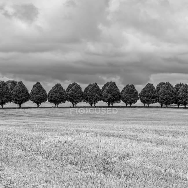 A row of trees dividing farm fields, Buttevant, County Cork, Ireland — Stock Photo