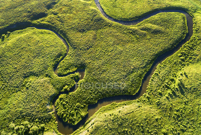 Aerial view looking straight down on a winding creek in a green field, near Millerville; Alberta, Canada — Stock Photo