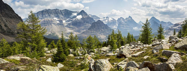 Panorama of a rocky mountains meadow with larch trees and mountain range in the background; British Columbia, Canada — Stock Photo