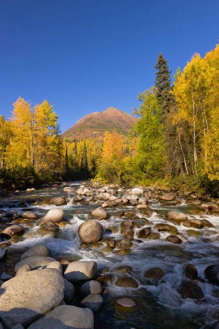 Il Little Susitna River scorre oltre betulle con foglie gialle, cielo blu profondo sullo sfondo, Passo Hatcher, Alaska centro-meridionale; Palmer, Alaska, Stati Uniti d'America — Foto stock