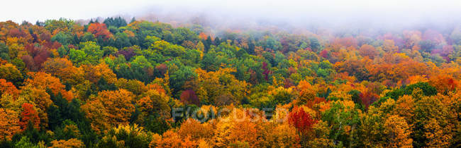 Vibrant autumn colored foliage in a forest of deciduous trees — Stock Photo
