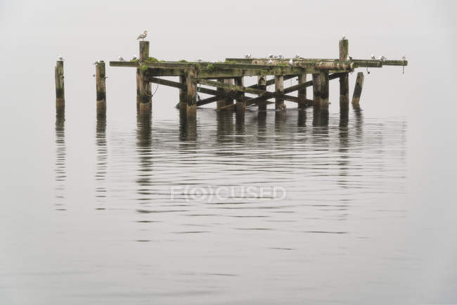 Old pier with seagulls on it; Djupavik, West Fjords, Iceland - foto de stock