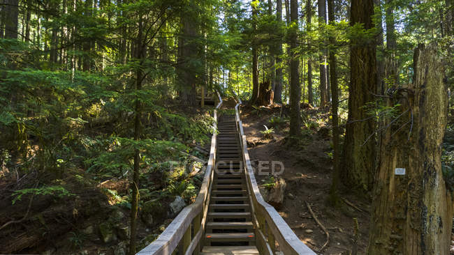Wooden steps through a forest, Feld-Powell Trail, Deep Cove, North Vancouver, Vancouver, Британская Колумбия, Канада — стоковое фото