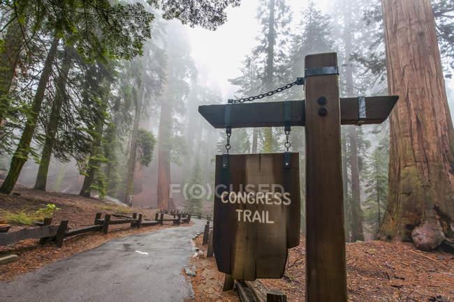 Congress Trail towards General Sherman, Sequoia National Park ; Visalia, California, États-Unis d'Amérique — Photo de stock