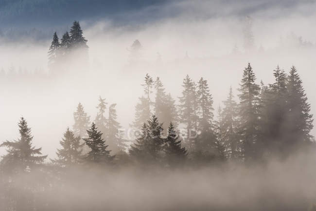 Fog in the forest at Jewell Meadows Wildlife Area, Jewell, Oregon, United States of America — Stock Photo