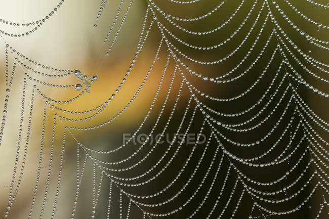 Spider web with dew drops; Astoria, Oregon, United States of America — Stock Photo