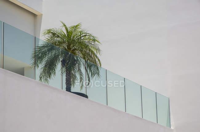 На балконі сидять пальми, а на балконі - гуатулько (штат Оахака, Мексика). — стокове фото