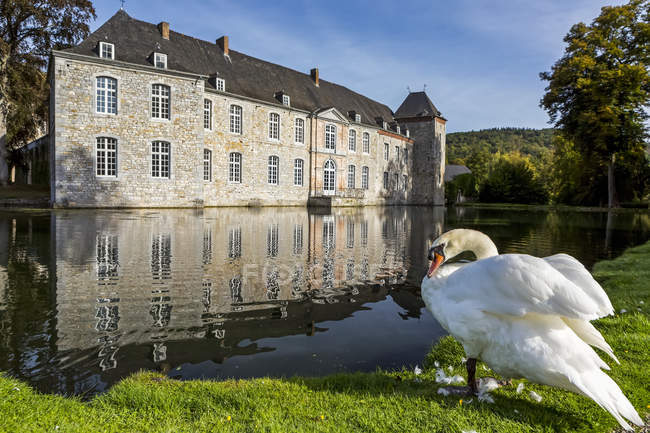 White swan at the edge of a pond with a castle reflecting in the water and blue sky, West of Godinne; Belgium - foto de stock