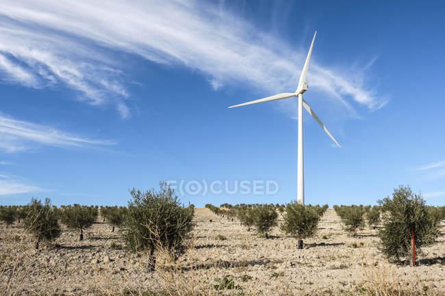Wind turbine amongst olive trees; Campillos, Malaga, Andalucia, Spain — Stock Photo