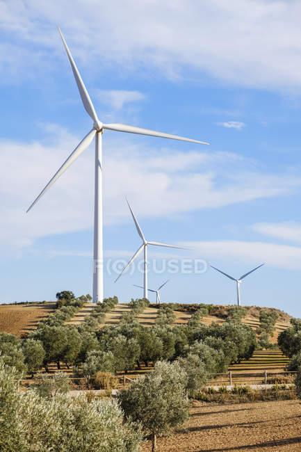 Turbinas eólicas entre oliveiras, Campillos, Málaga, Andaluzia, Espanha — Fotografia de Stock