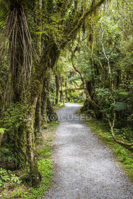 Lush foliage along a trail at the Roaring Billy Falls Walk, Mount Aspiring National Park; South Island, New Zealand — Photo de stock