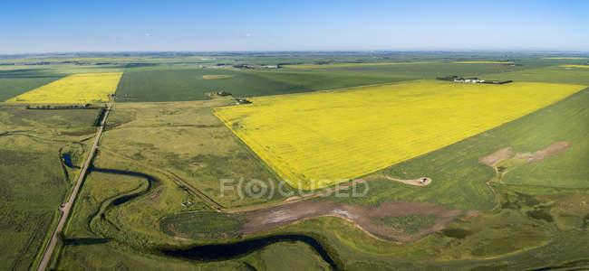 Vista aérea de alguns campos de canola floridos cercados por campos de grãos verdes e um riacho ventoso em primeiro plano com céu azul, Beiseker, Alberta, Canadá — Fotografia de Stock