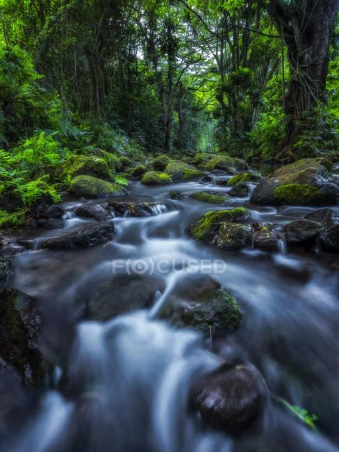 Corriente que corre a través de la exuberante vegetación en una selva tropical en Hawaii; Oahu, Hawaii, Estados Unidos de América - foto de stock