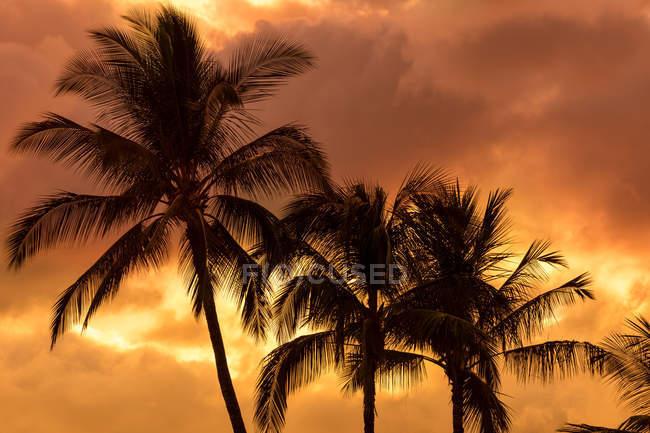 Palm trees silhouetted in an orange sky, Wailea, Maui, Hawaii, United States of America — Stock Photo
