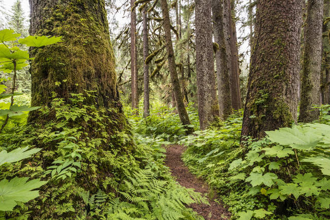 Trail through an old growth forest, Tongass National Forest; Alaska, United States of America — Foto stock