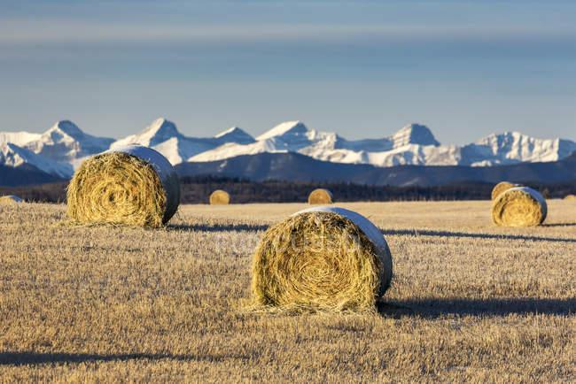 Balles de foin couvertes de neige dans un champ de chaume avec des montagnes enneigées et des contreforts en arrière-plan avec des nuages et un ciel bleu, à l'ouest de Calgary, Alberta, Canada — Photo de stock