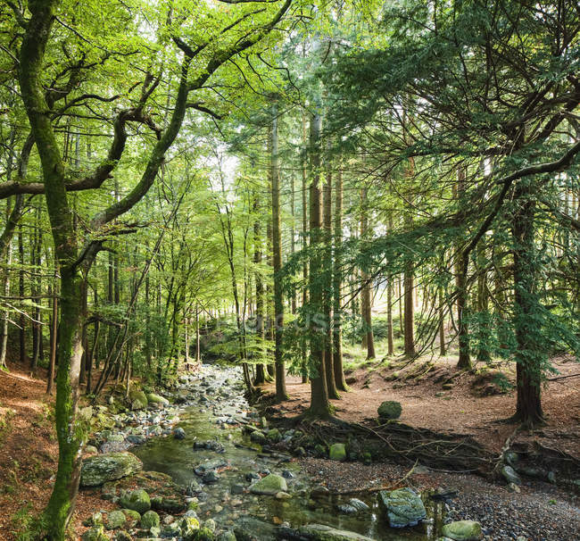 Tollymore Forest, Newcastle, County Down, Ireland — Stock Photo